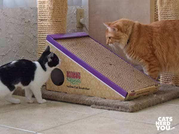 Incline Cat Scratcher