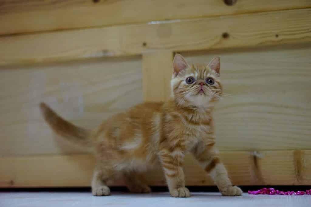 cat-1038426_1280