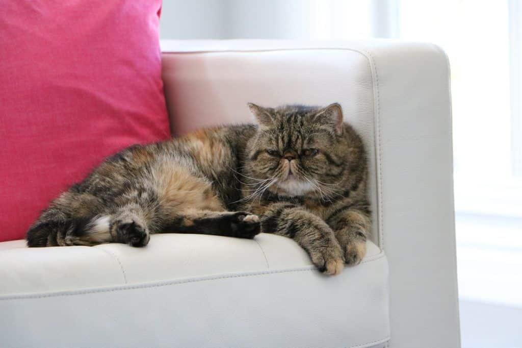 cat-1206539_1280