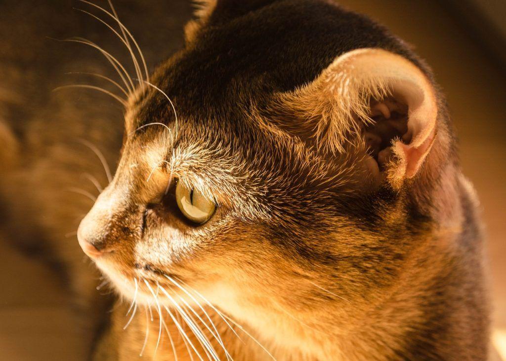 cat-1746822_1280
