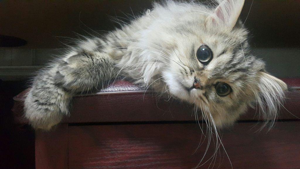cat-1996569_1280