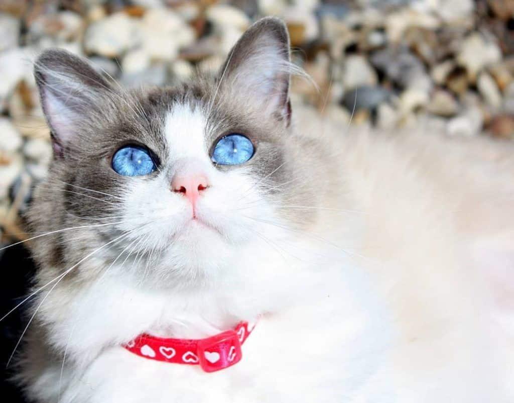 cat-2105657_1280
