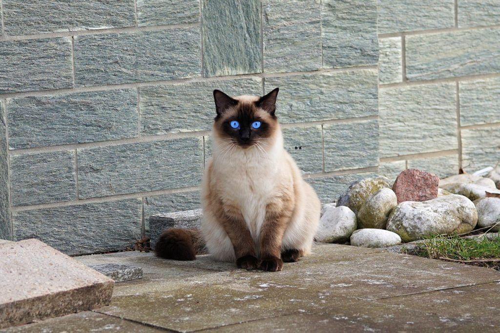 cat-2126225_1280
