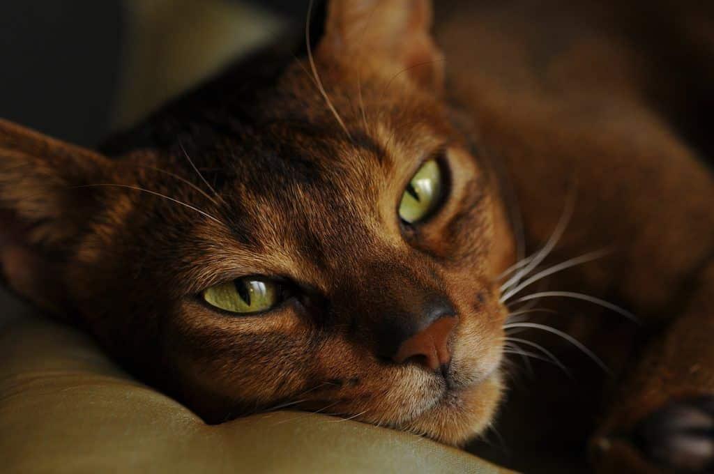 cat-3027835_1280