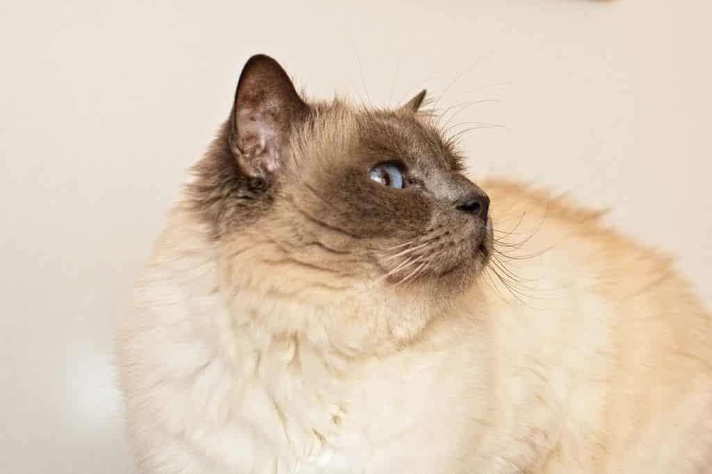 cat-4061570_1280