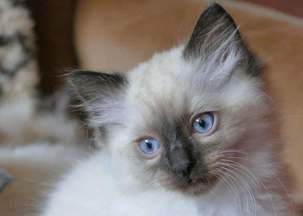 cat-4298133_1280