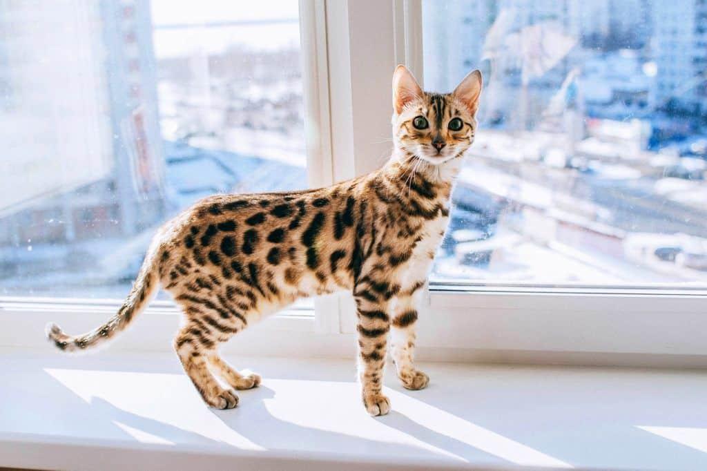 cat-4380683_1280
