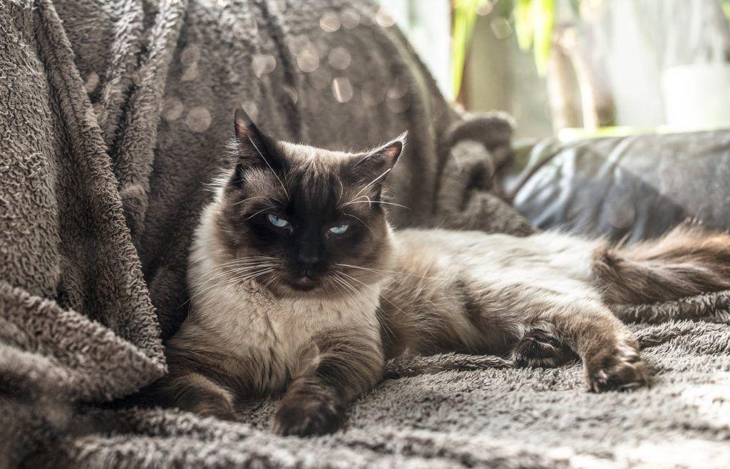 cat-4425461_1280