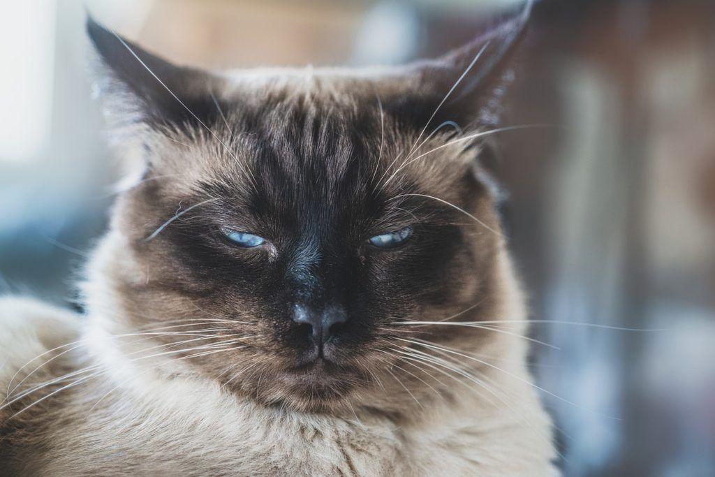 cat-4425802_1280