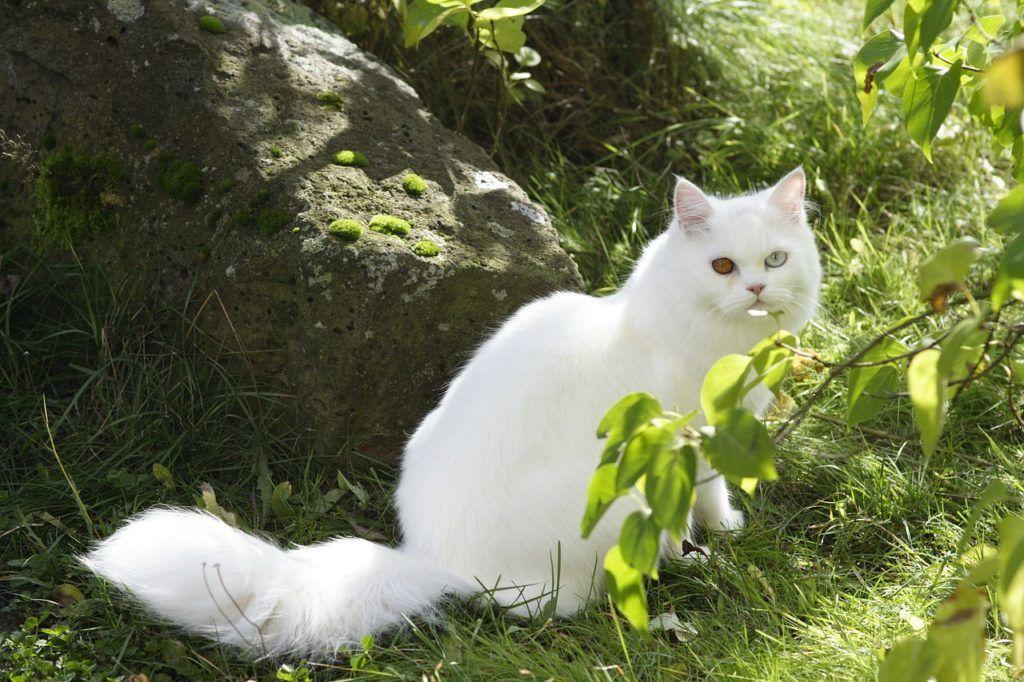 cat-83327_1280
