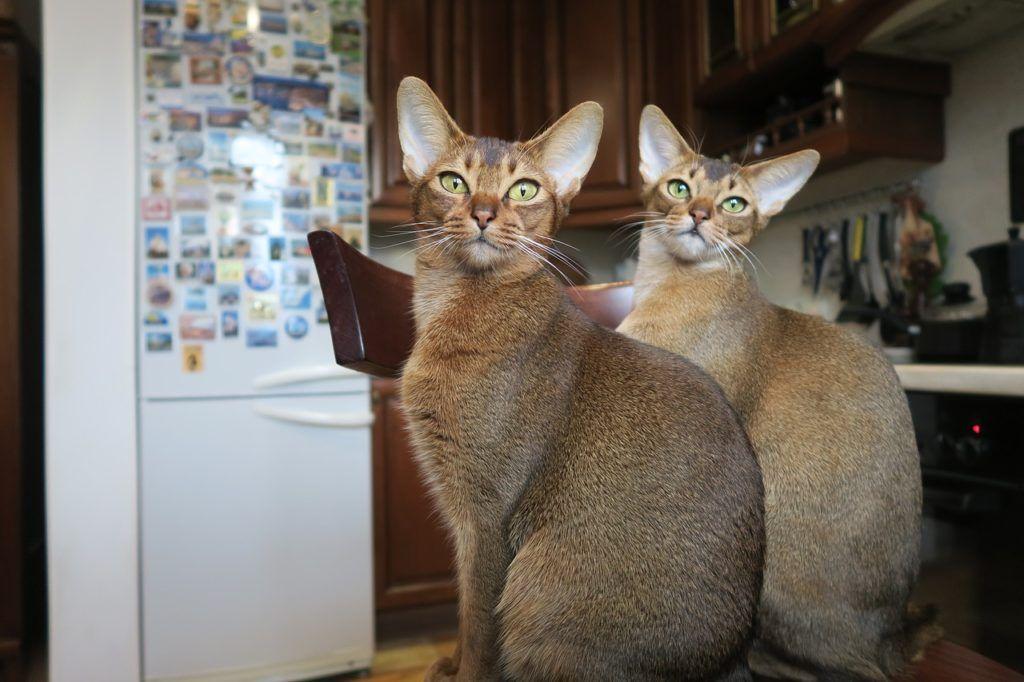 kittens-2136798_1280